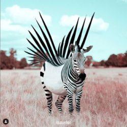 HPI Haut potentiel intellectuel Surdoue Zebre